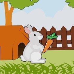 daucus bunny